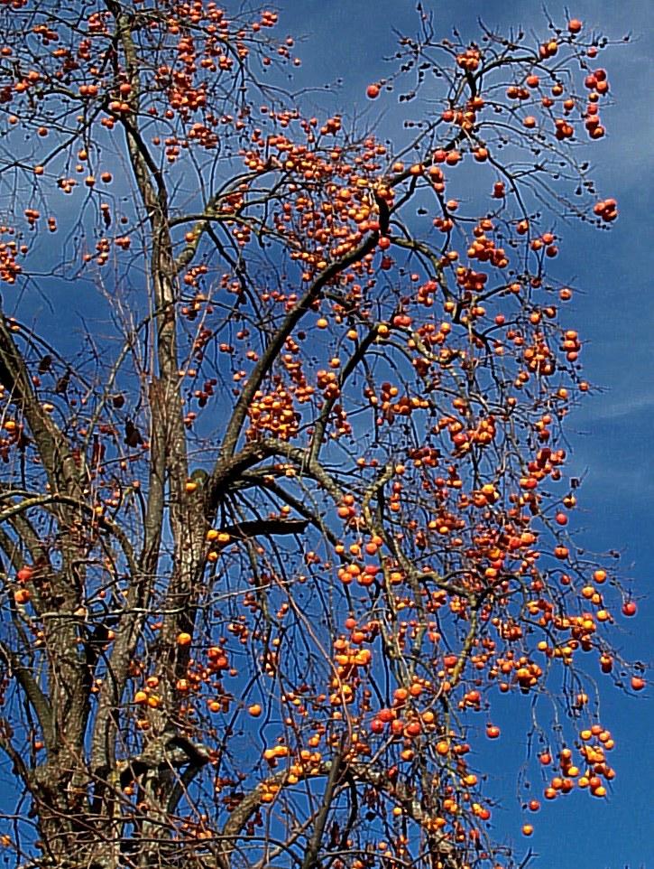 http://la.buvette.org/photos/boules_oranges-2.jpg