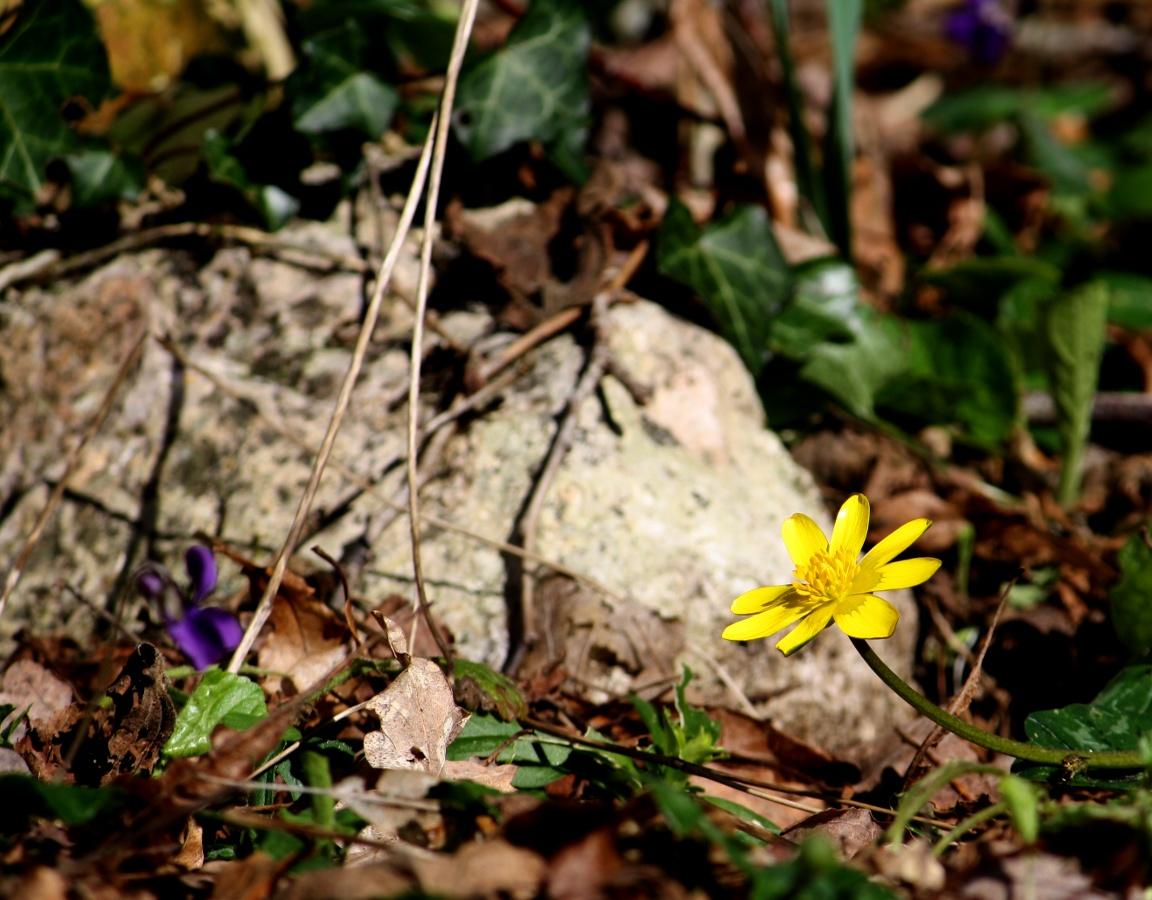 http://la.buvette.org/photos/communards/fleur-jaune.jpg